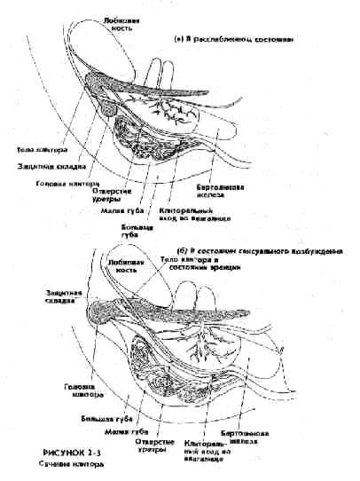 Влагалище и эякуляция в нём судите