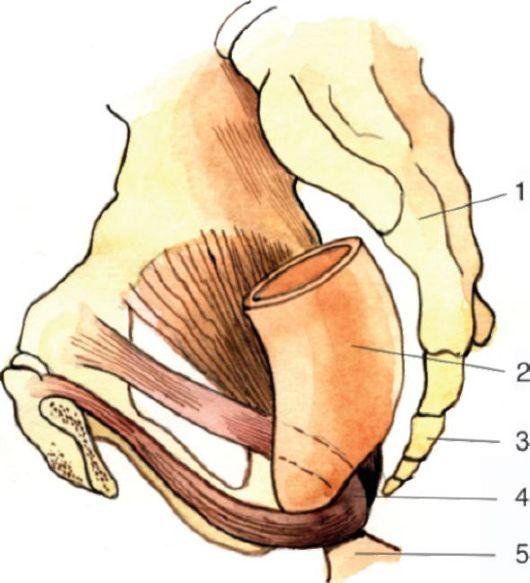 Самопроизвольные сжатия мышц влагалища ответ