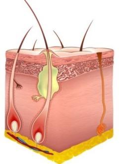 Фурункулы на интимном месте лечение в домашних условиях